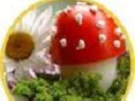 Jajka ugotować i obrać, pomidory umyć, przekroić w poprzek, troszkę wydrążyć, groszek i kukurydzę osączyć a sałatę umyć.  Jede...